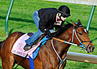 More Oaks Possibles Work at Churchill