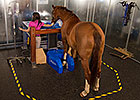 Palm Meadows Adds Standing MRI Unit