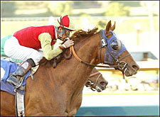 Star Cross Thumbs 'Nose' in San Pasqual