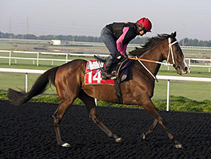 Star Empire at Meydan March 24, 2014.