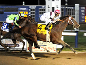 Star Guitar to Stand at Clear Creek Stud