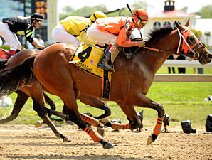 Contessa Resumes Pimlico Roll in Sprint