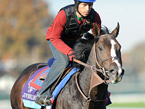 Juvenile Turf Entries Must Tune Up on Dirt