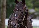 Japan's Stay Gold, Sired Orfevre, Dead at 21