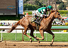 Stellar Wind 7-2 Choice for Oaks