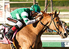 Stellar Wind Striking for Curlin