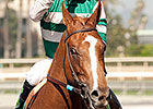 Stellar Wind Fresh for Distaff