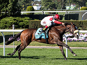 Stephanie's Kitten wins the 2014 Flower Bowl.