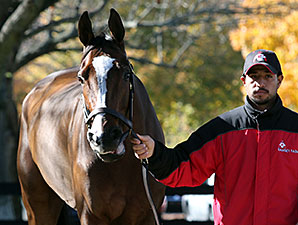 Stephanie's Kitten at the Fasig-Tipton November Sale.