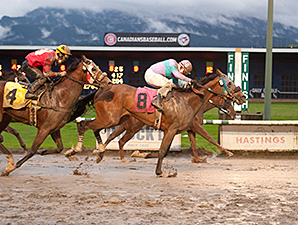 Stepupforthemoney wins the 2013 CTHS Sales Stakes.