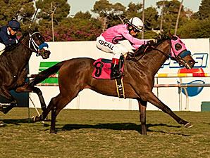 Stoney Fleece wins the 2011 Generous Stakes.