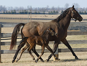 Storm Surge's First Foal