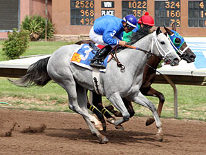 Storm With Flair wins the 2013 The Dessie & Fern Sawyer Futurity Trials - Division 2.