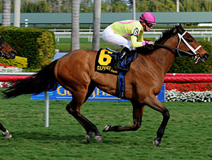 Stradivinsky Captures Gulfstream Turf Sprint
