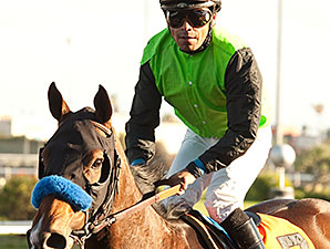 Streaming wins the 2013 Hollywood Starlet.