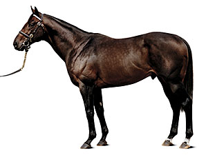 Top Stallion Street Cry Dead at Age 16