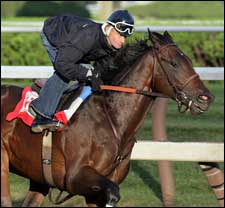 Street Sense Primed for Travers