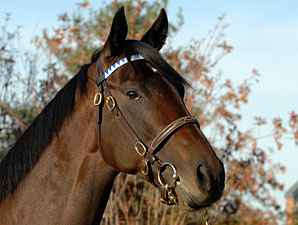Young Darley Stallions Have 1st Foals