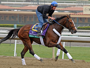 Strike the Moon - Breeders' Cup 2012