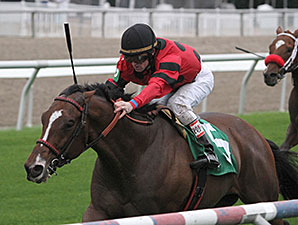 String King to Try Dirt at Fair Grounds