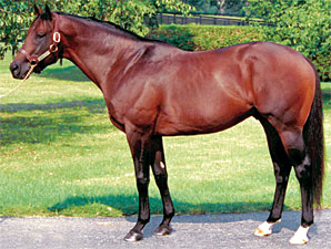 Strong Hope Colt Wins in England