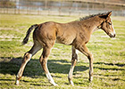 First Reported Foal for Strong Mandate