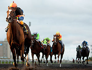 Strut the Course wins the 2014 Maple Leaf Stakes.