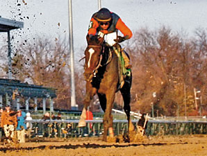 Suave Voir Faire finishing third in the Golden Rod.