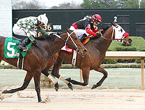 Subtle Indian wins the 2015 Gazebo Stakes.