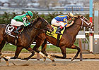 No 'Surprise' in New York Stallion Stakes
