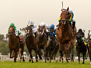 Suggestive Boy wins the 2013 Arcadia.