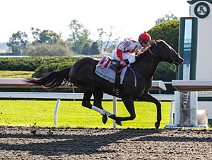 Breeders' Cup Contenders Breeze at Keeneland