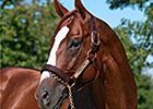 Belmont Winner Summer Bird Dies in Japan