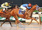 Summer Bird Doing Well, Breeders' Cup Next
