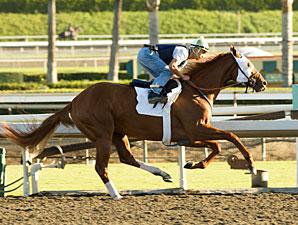 Summer Bird works at Santa Anita on October 17, 2009.