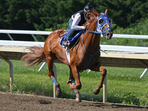 Summer Bird, Papa Clem Work for Haskell