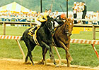 Easy Goer vs Sunday Silence