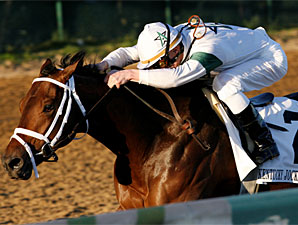 Super Saver Starts Back in Tampa Bay Derby