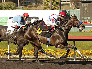 Surfcup Gets First Stakes Win in Snow Chief