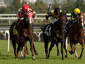 Surtsey wins the 2014 Avowal Stakes.