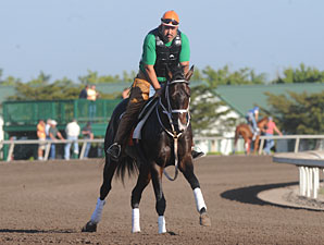 Sweet Ducky Sold; To Run in UAE Derby