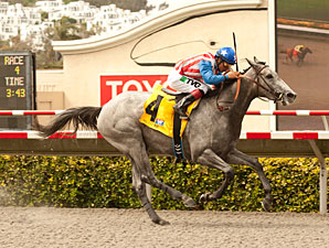 Sweet Marini wins the 2013 Fleet Treat Stakes.