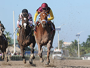 Sweet N Discreet wins the 2014 Florida Sunshine Millions Distaff Stakes.
