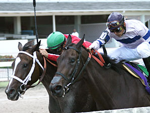 Sweet Repent wins the 2009 Judy's Red Shoes.