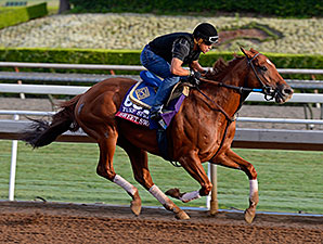 Sweet Swap works for the Breeders' Cup Oct. 26, 2014.