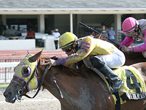 Sweetlalabye wins the 2009 Desert Vixen Division of the Florida Stallion Stakes