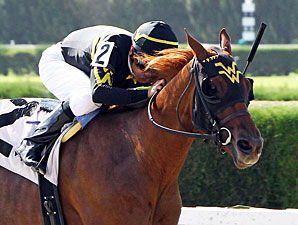 Sweetmarys Success wins the 2013 J J'sdream Stakes.