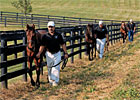 Trade Zone: Baby Boot Camp-Prepping Yearlings