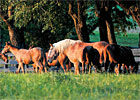 Trade Zone: Proper Nutrition for Broodmares