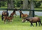 Trade Zone: Equine Insurance